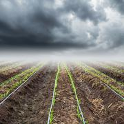 Corn field with storm clouds Stock Photos