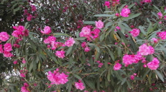 Close up, flowers in Park Guell. Stock Footage