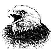 Black and white eagle hand drawn Stock Illustration
