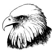 Black and white eagle hand drawn - stock illustration
