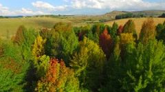 Aerial Footage flying over Bright coloured trees. Stock Footage