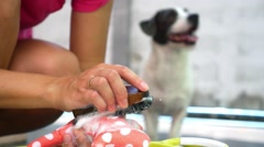 Washing Pet Toys of Cute Funny Dog Outdoors Stock Footage