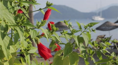 Flowers and Beach Scene, Marmaris, Anatolia, Turkey Stock Footage