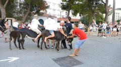 Donkey - Traditional Donkey Race - Mediterranean Customs - Doneky Funny Stock Footage