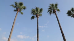 Palm Trees and Promenade, Marmaris, Anatolia, Turkey - stock footage