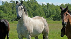 Four big horses standing on the grass Stock Footage