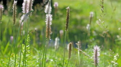 Stalks of green reeds on the field Stock Footage