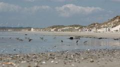 Little birds on summer beach Stock Footage