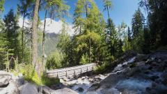 Rapid stream in the alpine forest with rocks and tall trees. Wood bridge Stock Footage