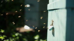 Apiary with bees - stock footage