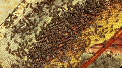 Stock Video Footage of Apiary with bees inside beehive