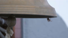 A small spider hanging on the bell Stock Footage