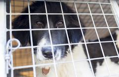 Ownerless dog in cage - stock photo
