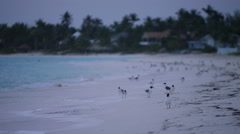 Tropical island shoreline at dawn Stock Footage