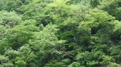 Dense tropical jungle background Stock Footage