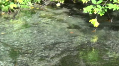 The flow of water in a mountain river with green leaves Stock Footage