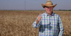 Thumbs Up Sign OK Hand Gesture Good Wheat Harvest Satisfied Agriculture Producer Stock Footage