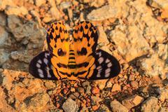 Close up of moth - stock photo