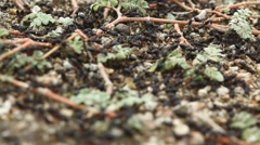 Ants on the Grass Stock Footage