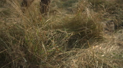 Civil War Reenactors soldier falling to the grass, Slo mo - stock footage