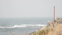 Oregon Coast Scenic: Seagull On Post. Lock Off. Sound Stock Footage