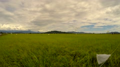 Beautiful and tranquil paddy rice plantation scene, camera pan right - stock footage