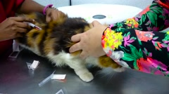 Stock Video Footage of Vet Injecting Vaccine To Cat