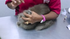 Vet Gives Grey Cat Oral Tablet - stock footage