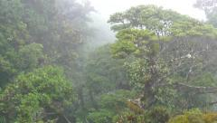 Jungle Rainforest Forest Canopy Trees Monteverde National Park Costa Rica Stock Footage