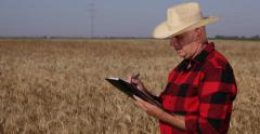 Farmer Man  Countryside Person Looking Growing Wheat Crop Taking Agenda Notes Stock Footage