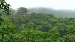 Landscape Nature Rainforest Jungle Tenorio Volcano National Park Costa Rica Stock Footage