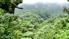 Trees Forest Canopy Jungle Rainforest Monteverde National Park Landscape Fog - stock footage