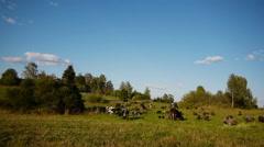 Herd of farm domestic animals grazing on green field - stock footage