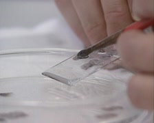 Lab technician prepares a microscope slide with brain tissue Stock Footage