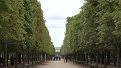 Avenue of trees (in 4k) in the Jardin des Tuileries, Paris, France. Stock Footage