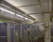 Housing of laboratory pigs in containers + pan Stock Footage