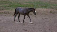 Gray horse on ranch Stock Footage