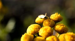 Insect bug Stock Footage