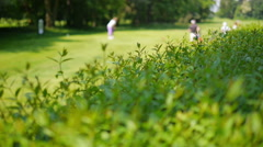 Close up of a bush with golf player in the background Stock Footage