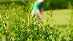 Close up of a bush and a man playing golf in the blurred background Stock Footage