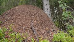 Dolly shot of huge ant hill in boreal forest Stock Footage