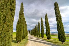 Tuscan landscape with cypress alley near Pienza Stock Photos