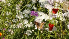 Butterfly On Flower Fly's Away Stock Footage