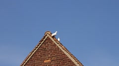 Dove Flying Off Building - stock footage