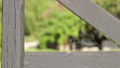 Old Spider Web on Wooden Gate Stock Footage