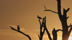 Dead tree silhouette at sundown filmed in the polder in the Netherlands Stock Footage