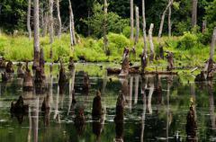 Stock Photo of Swamp