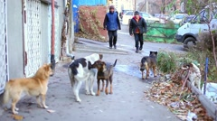 A pack of dogs on the street Stock Footage