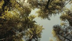Forest treetops in circular motion. Sunny sky in soft colors. Slow motion Stock Footage