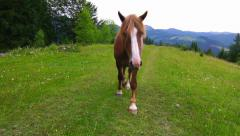Horse Grazing in a Meadow. Stock Footage
